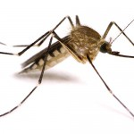 How to Keep Mosquitoes Away: City of Bryan Mosquito Abatement Program