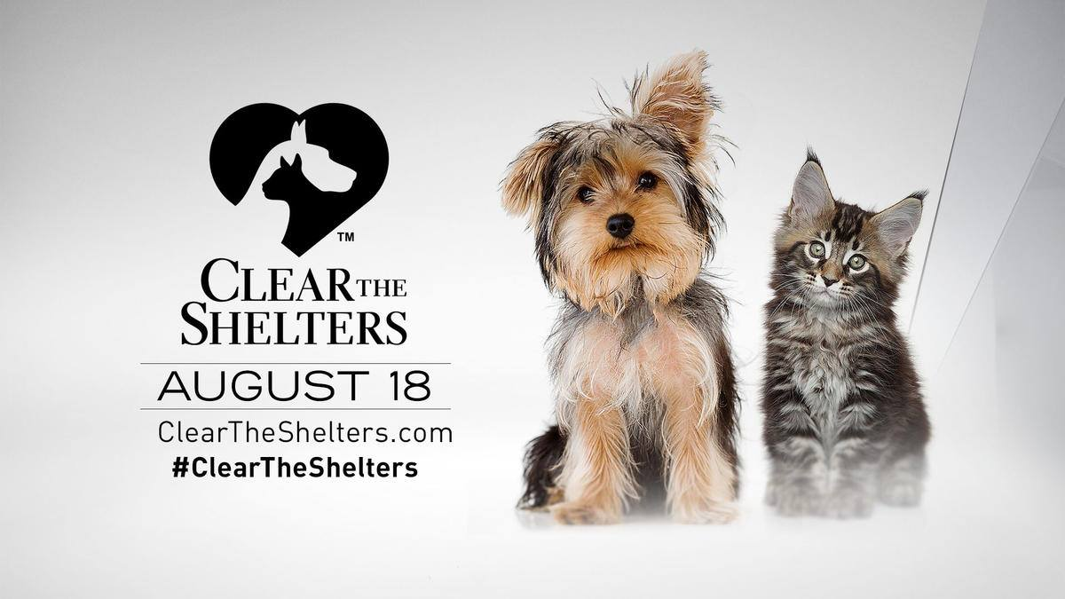clear the shelter day at Bryan Animal Center